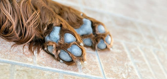 Dog paw banner